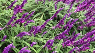 草刈り 除草剤散布