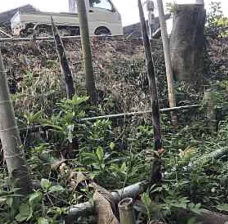 竹の枯らせ方